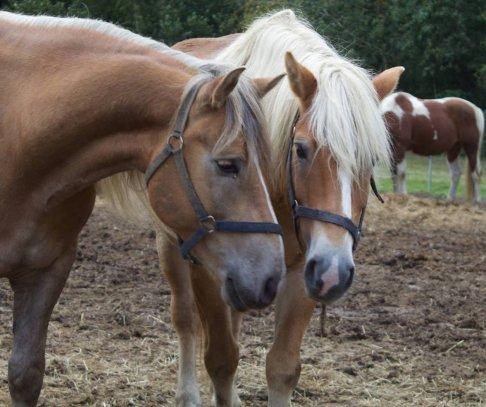 Wandeltochten te paard de boshoef de boshoef for Paard aan huis te koop